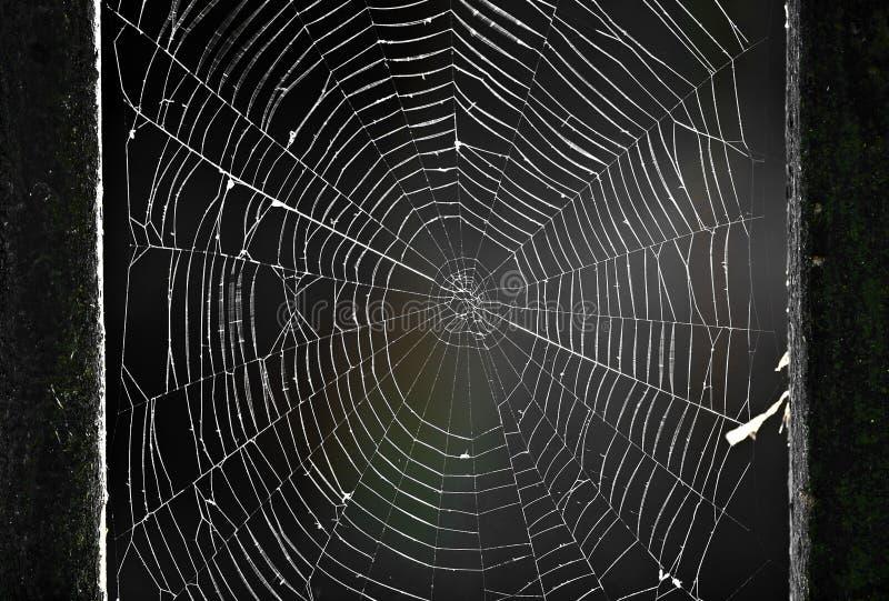 Spiderweb zdjęcia royalty free