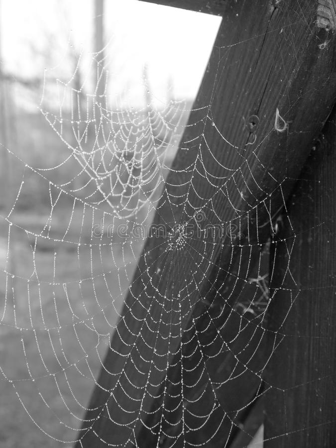 Free Spiderweb Royalty Free Stock Images - 27967059