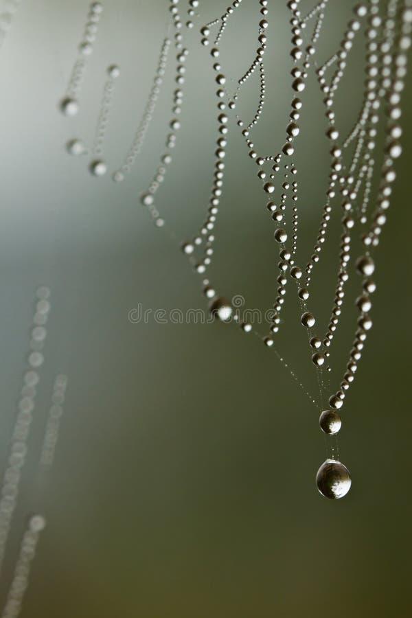 Download Spiderweb stock image. Image of drops, grey, light, horizontal - 29398617