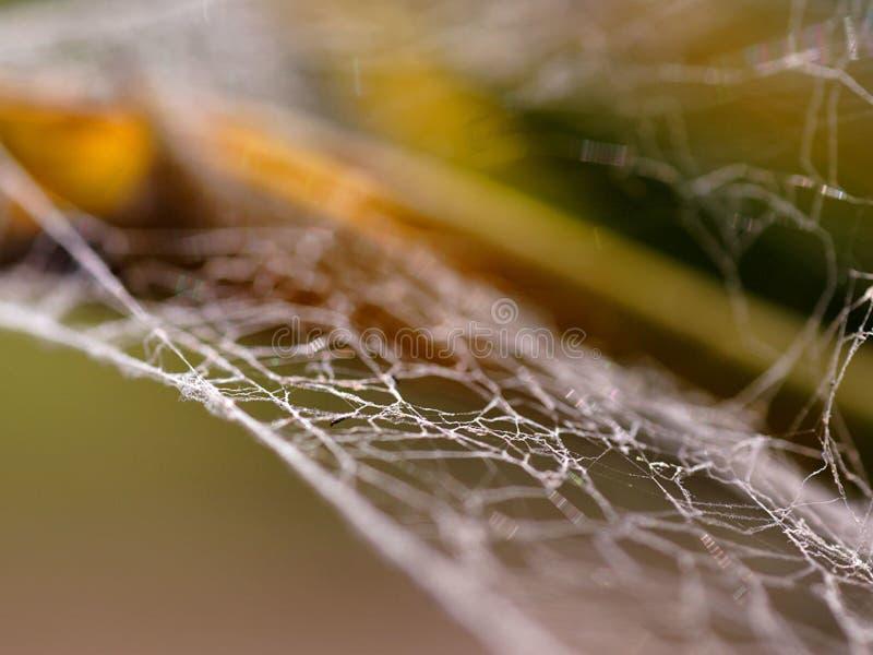 Spiderweb 3 库存照片