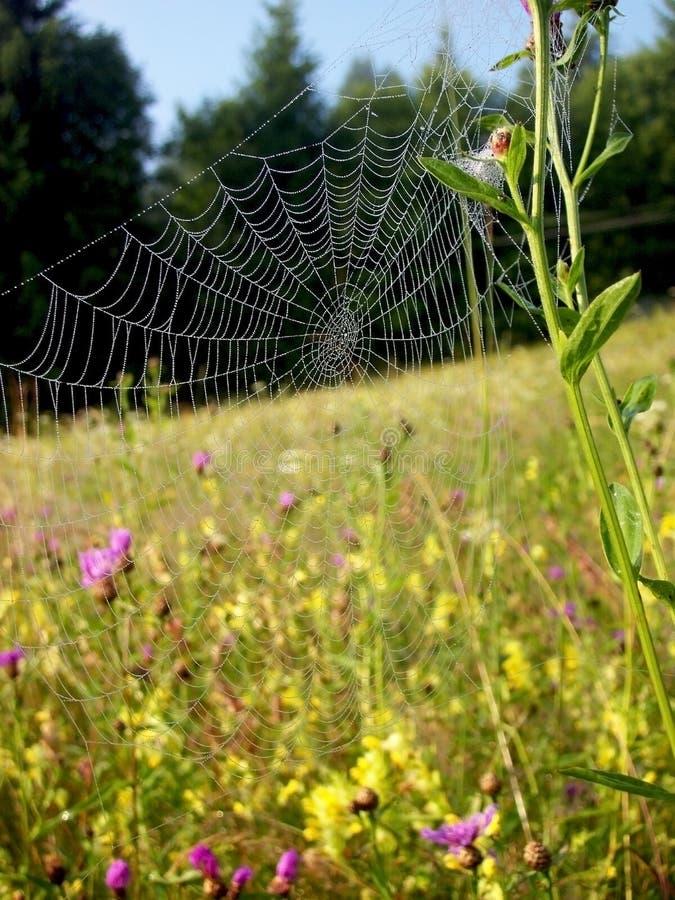Spiderweb imagen de archivo
