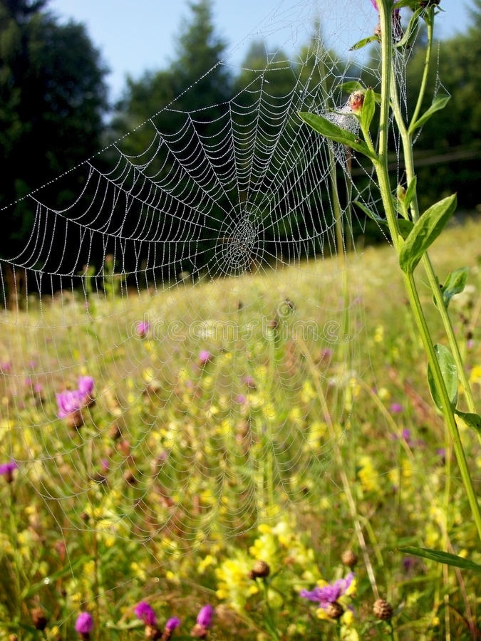 Spiderweb obraz stock