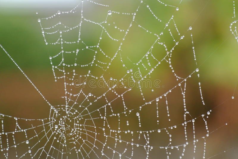 Spiderweb obraz royalty free