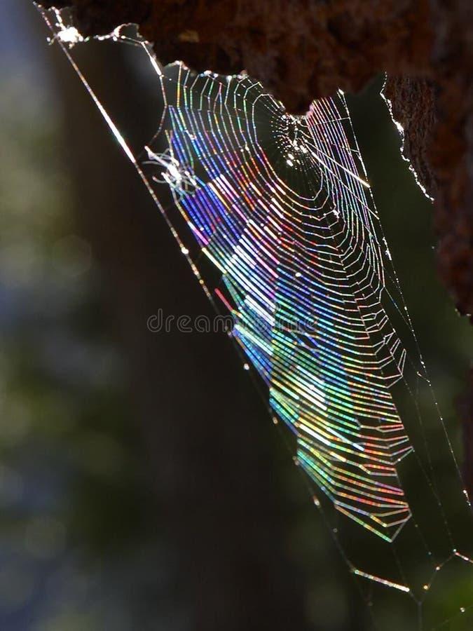 Spiderweb 4 免版税库存照片