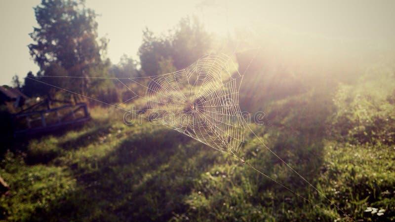 spiderweb zdjęcie stock