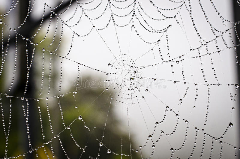 spiderweb lizenzfreie stockbilder