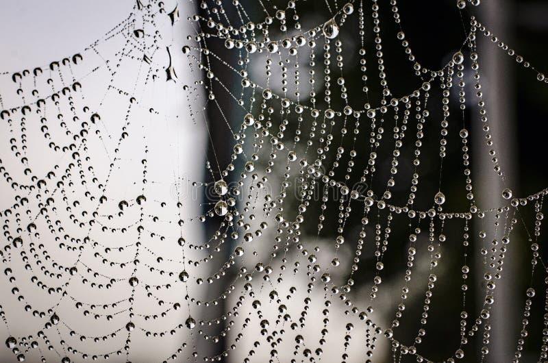spiderweb imagen de archivo libre de regalías