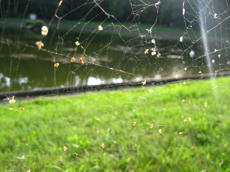 spiderweb 免版税图库摄影