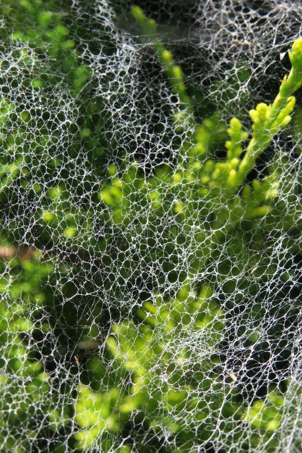 Spiderweb 2 免版税图库摄影