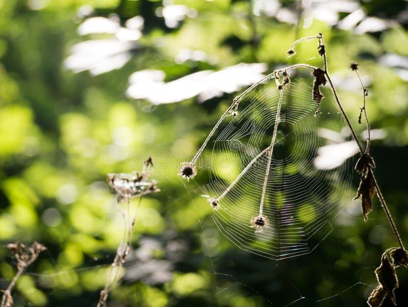 spiderweb fotografía de archivo libre de regalías