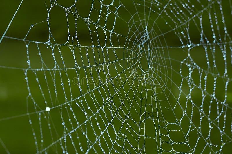Spiderweb stock foto