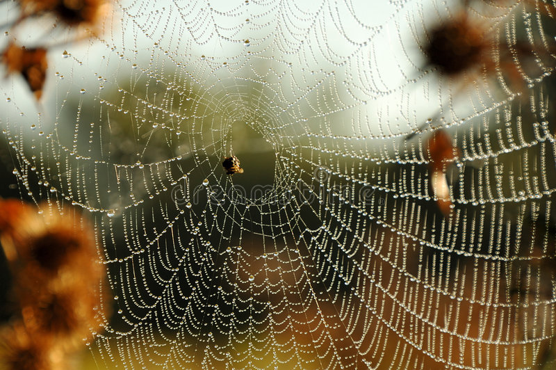Spiderweb stock photos
