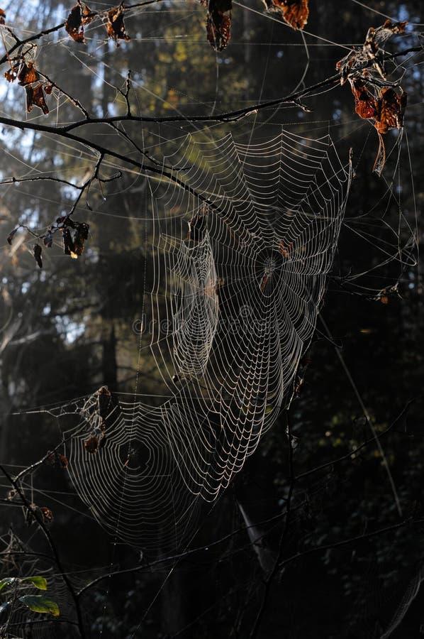 spiderweb 图库摄影