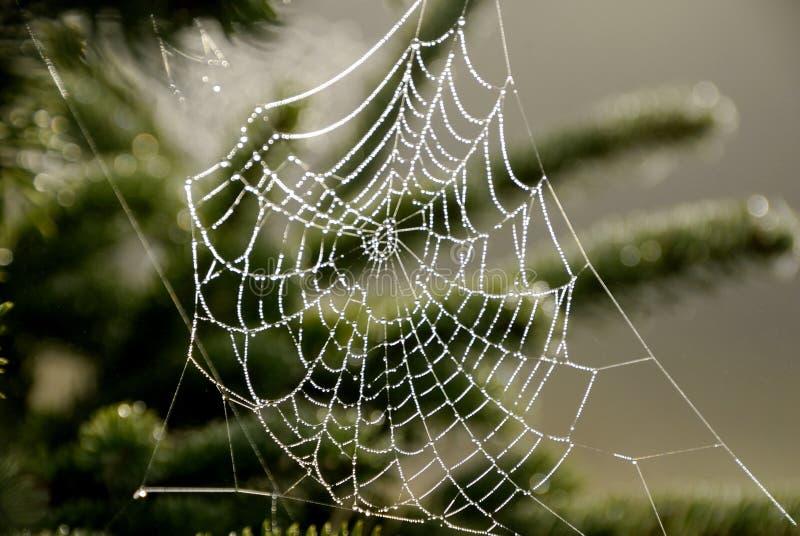 spiderweb 免版税库存照片
