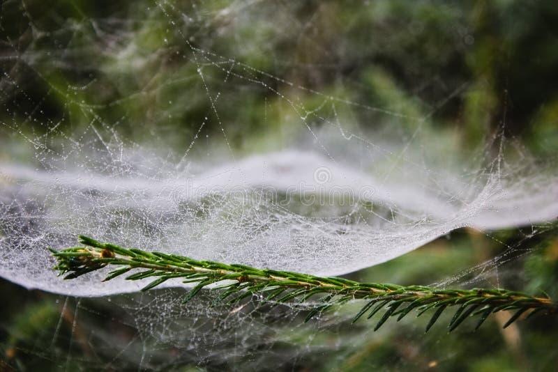 spiderweb image stock