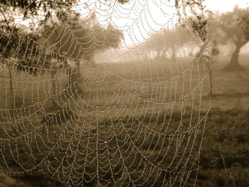 spiderweb στοκ εικόνα με δικαίωμα ελεύθερης χρήσης