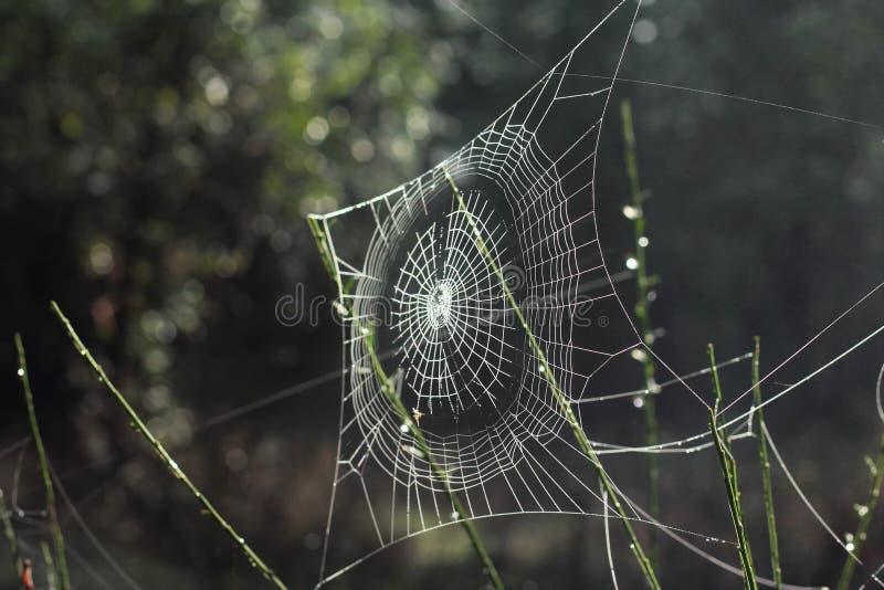 Spiderweb Free Public Domain Cc0 Image