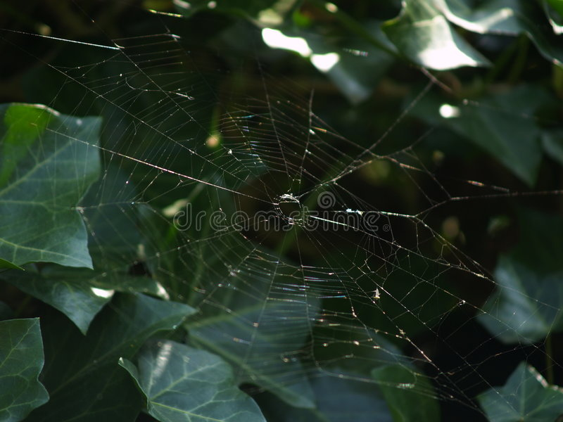 Download Spiderweb stockfoto. Bild von opfer, falle, spinne, spiderweb - 873098