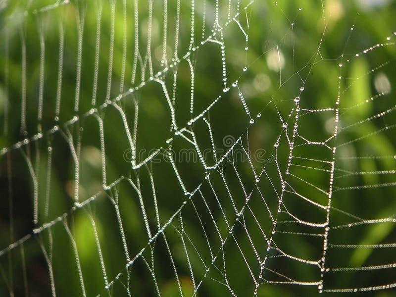 露水和Spiderweb 库存照片