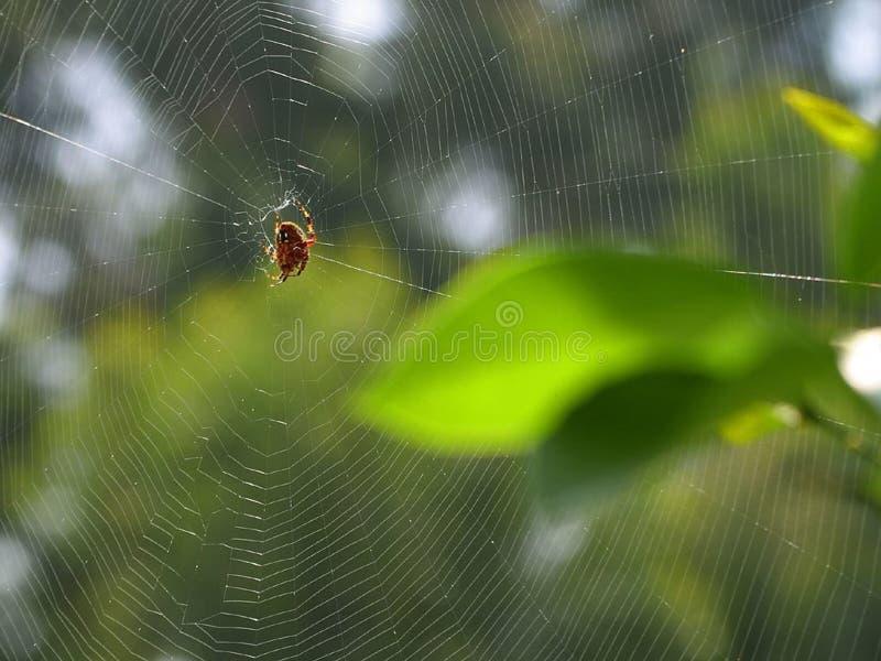 spiderweb 库存照片