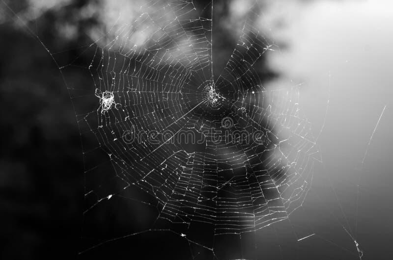 spiderweb royaltyfria bilder