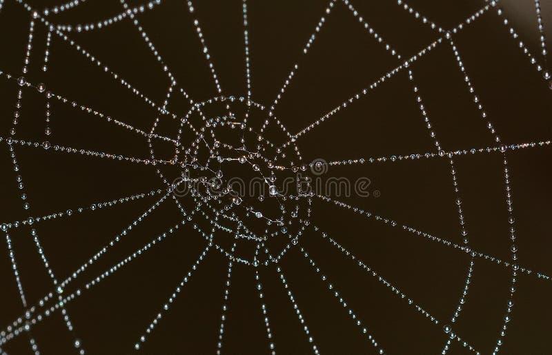 与露珠的spiderweb 免费的公共领域 Cc0 图片