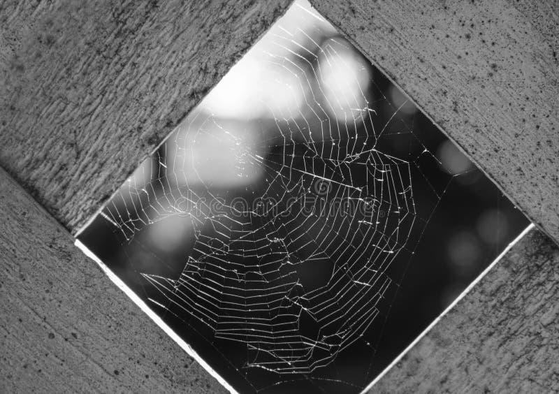 Spiderweb blanco y negro imagenes de archivo