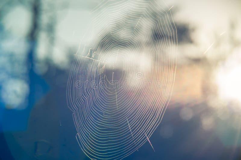 Spiderweb in bos royalty-vrije stock fotografie