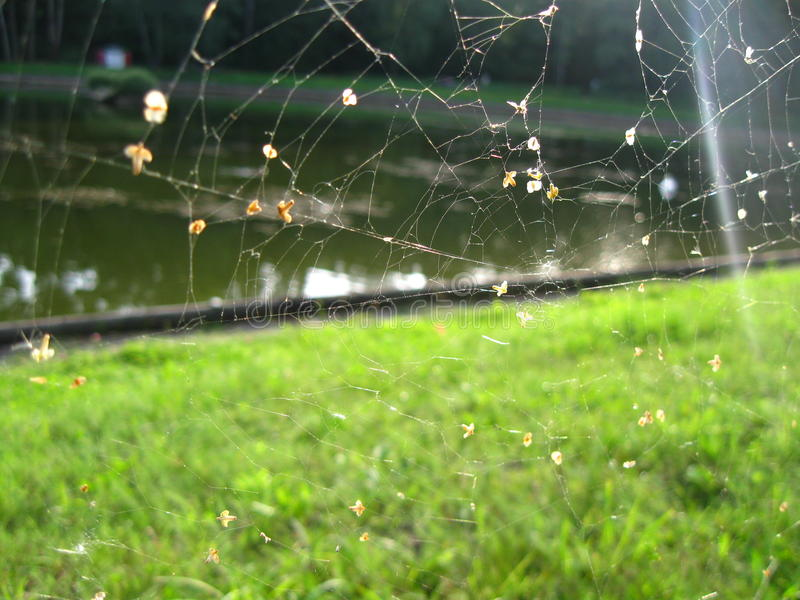 Spiderweb royalty free stock photography