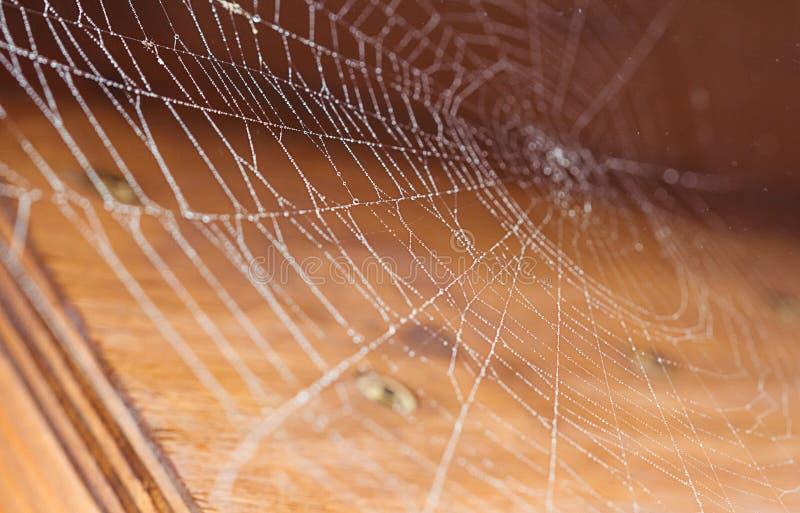 Spiderweb cobriu na chuva, orvalho da manhã imagens de stock