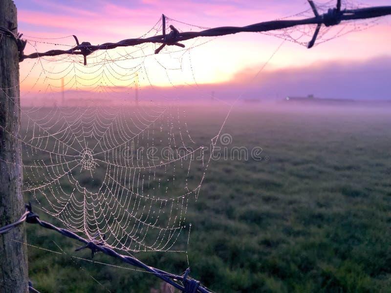 Spiderweb Sunrise royalty free stock image