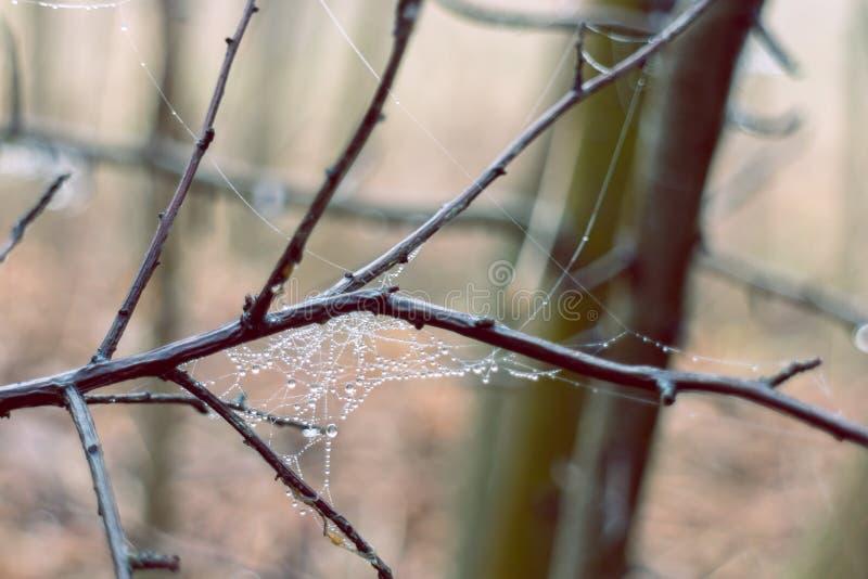 Spiderweb con las gotitas que relucir en la ramita foto de archivo libre de regalías