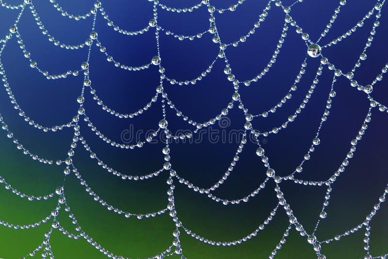 Spiderweb con le gocce di rugiada fotografia stock