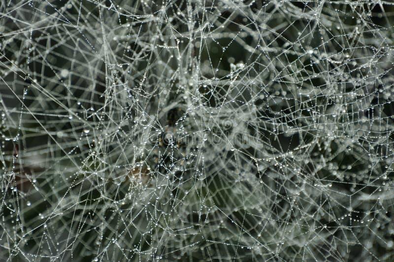 Download Spiderweb congelato immagine stock. Immagine di congelato - 17000013