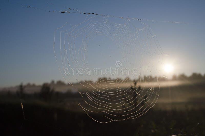 Spiderweb cubrió con descensos de rocío en la salida del sol imágenes de archivo libres de regalías