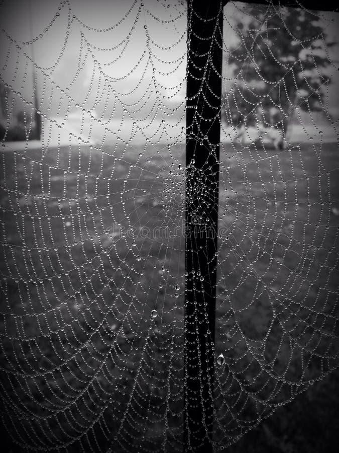 Spiderweb in de regen stock foto's