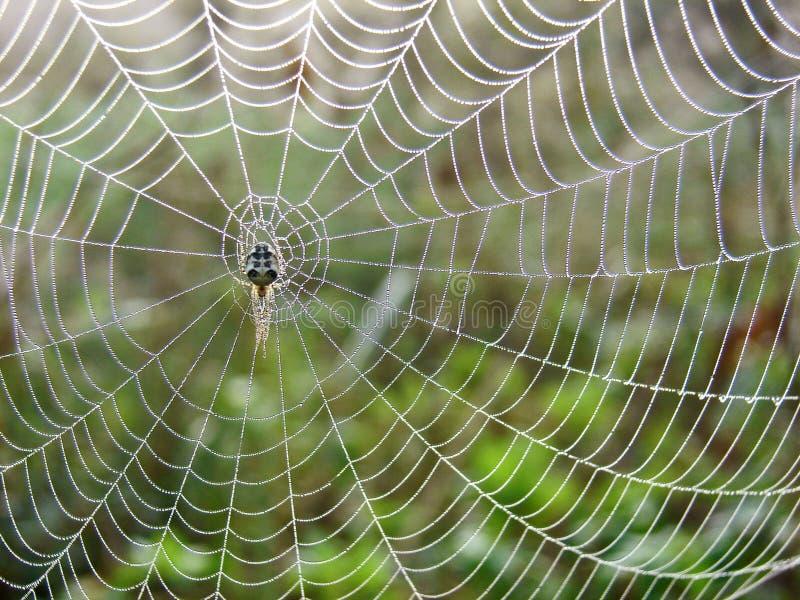 Spiderweb in de weide stock foto