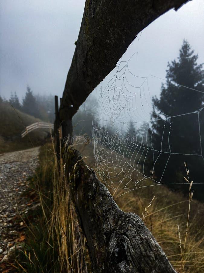 spiderweb royaltyfri foto