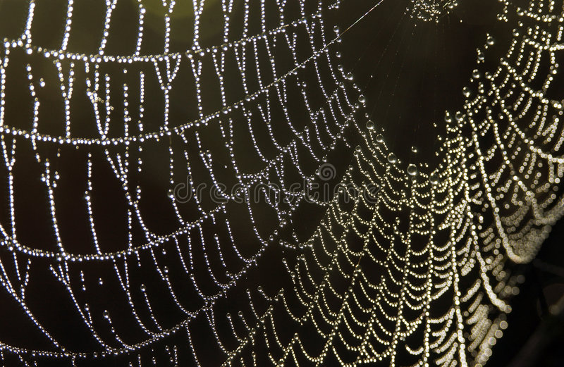 Download Spiderweb With Dew Droplets Stock Image - Image: 4347939