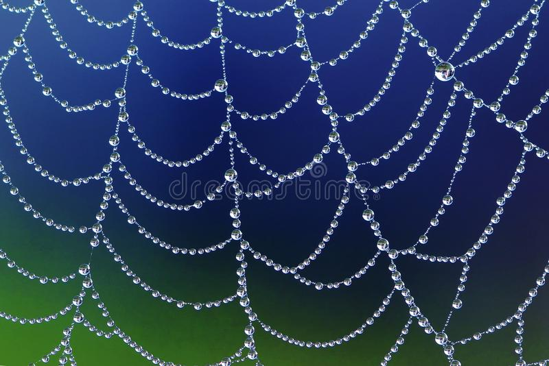 Spiderweb with dew drops. Beautiful spiderweb with dew drops stock photo