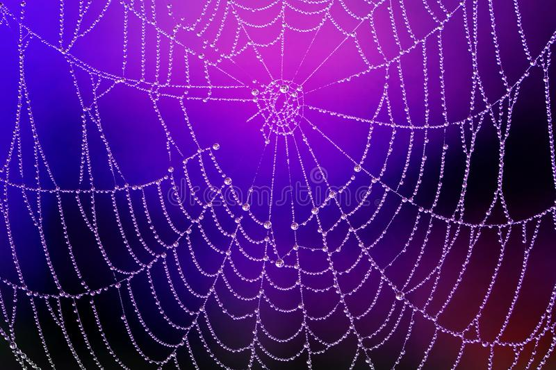 Spiderweb with Dew Drops. Beautiful spiderweb with dew drops against blurred night nature background