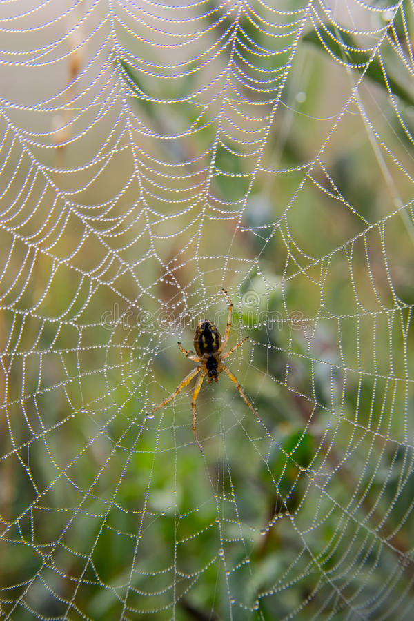 Download Spiderweb With Dew In The Morning Stock Image - Image: 33171641