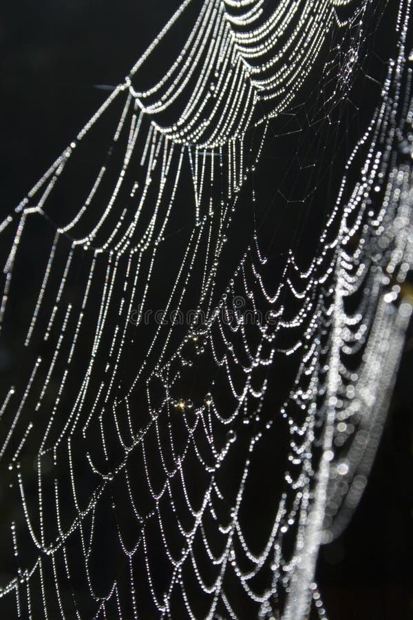 Spiderweb Dewy fotografia de stock royalty free