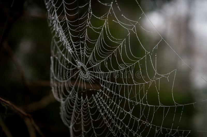 Spiderweb in closeup, can see water drops stock images