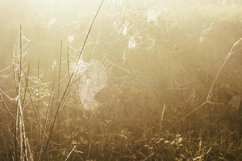 A spiderweb frozen by winter frost stock image