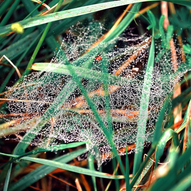 A Spiderweb in Grass After a Rain stock photography