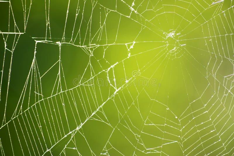 Spiderweb on Green stock photos