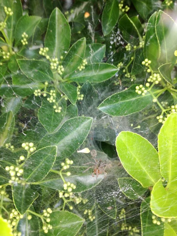 spiderweb stock fotografie
