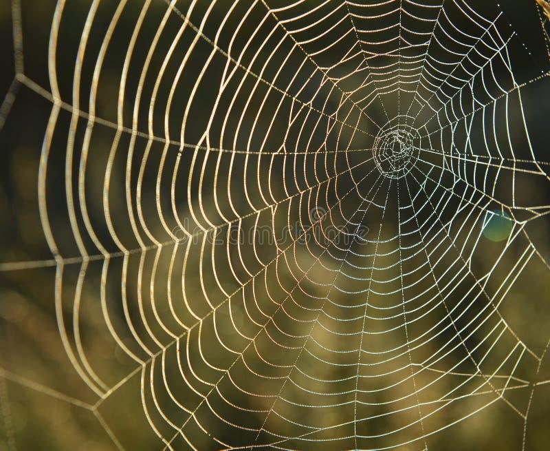 Spiderweb-Hintergrund stockfotografie