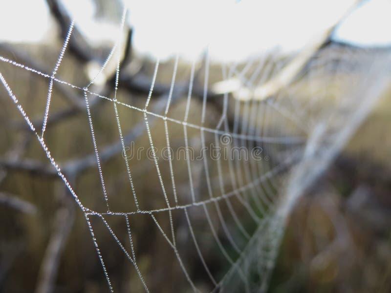 Spiderweb i dimma royaltyfria foton